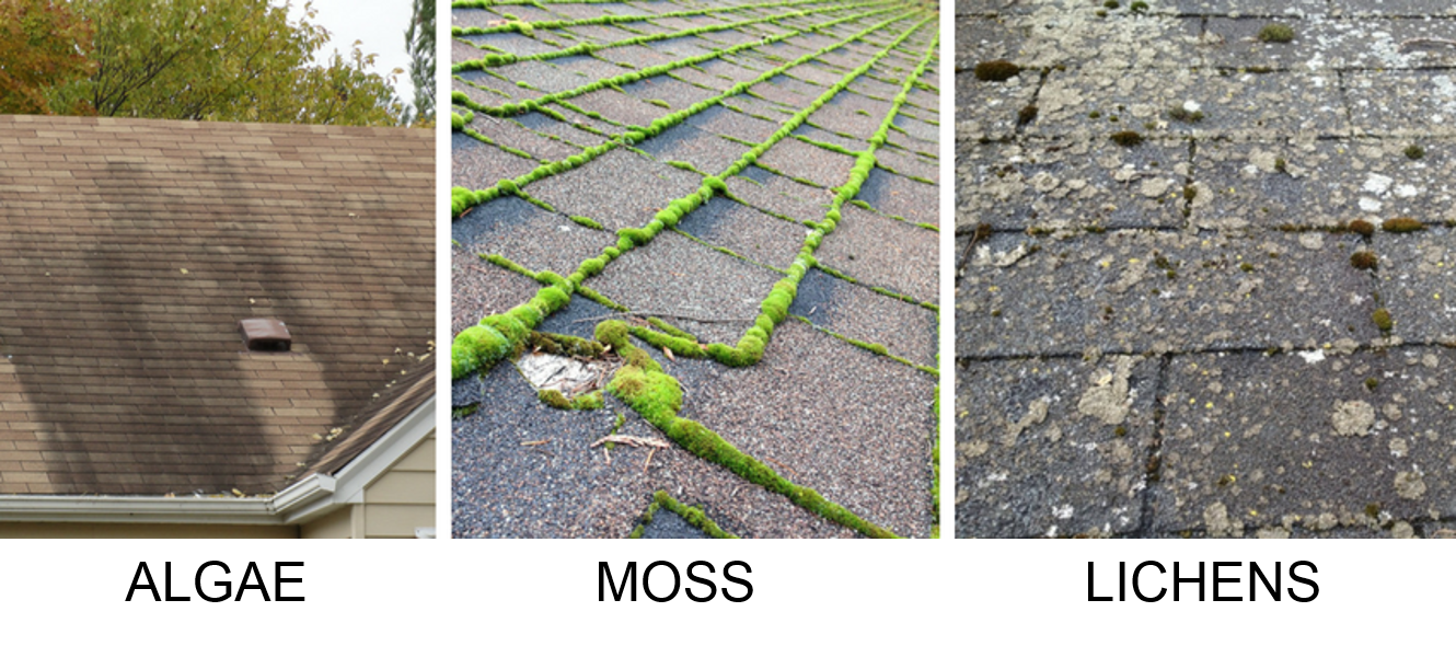 what causes moss on roof shingles